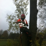Ash tree dismantle chilwell golf course Nottingham