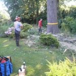 Oak tree dismantle Bulcote Nottingham