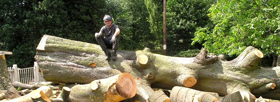 Ben Saxton Tree Surgeon Services in Nottingham