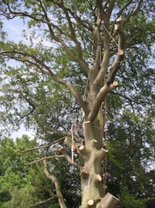 Tree dismantling and removal nottingham